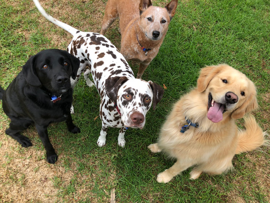 Happy group of friends on a group dog outing!