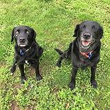 Jack & Maggie - Heads & Tails Dog Walkin