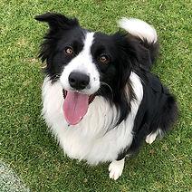 Dog Training Dog Trainers Melbourne