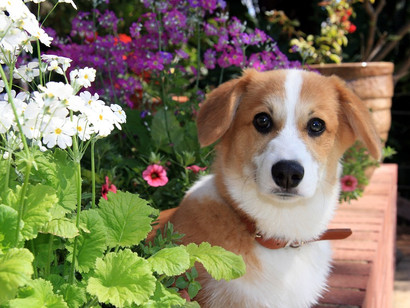 Are These Growing In Your Garden? 7 Highly Poisonous Plants To Pets!
