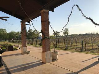 Event at Delaney's Vineyards