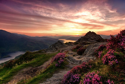 scotland-blooming-heather.jpg