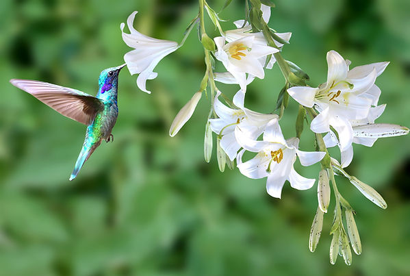 Hummingbird (Image by Joseph Den from Pi