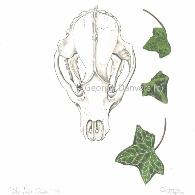 'Life After Death'Series. Skull with Ivy