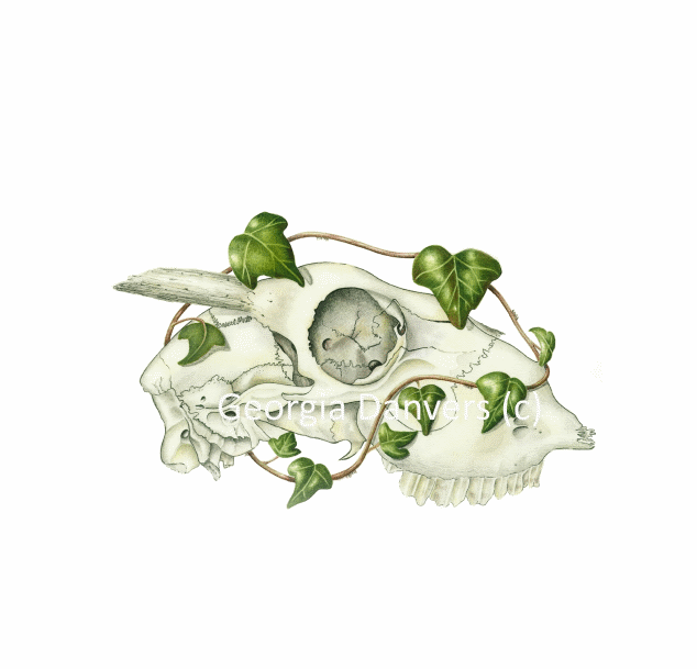 'Life After Death' Series. Skull with Ivy