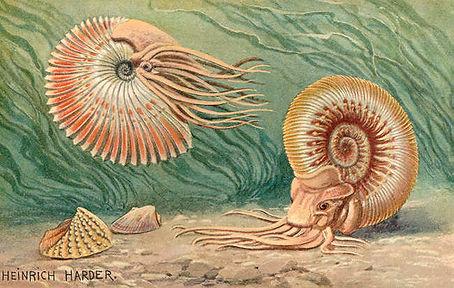 Ammoniten.jpg