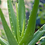 Thumbnail: Organic Cucumber & Aloe Hydrating Spray