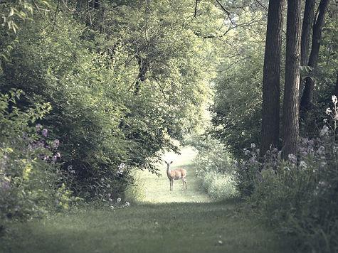 deer on grass field photography_edited_edited.jpg