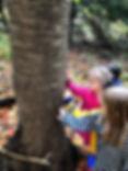 Tree Lenoir.jpg