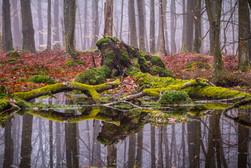 Fallna träd / Fallen trees