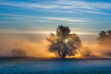 Morgonljus / Morning light