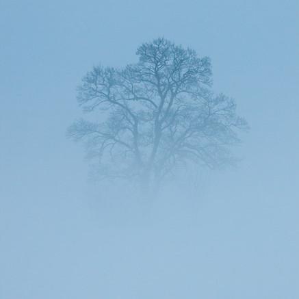 Träd i dimma / Tree in fog