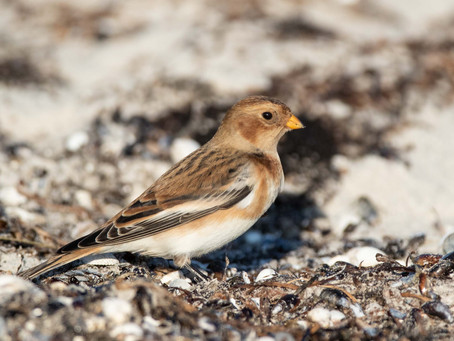 Fågelbilder från november och december