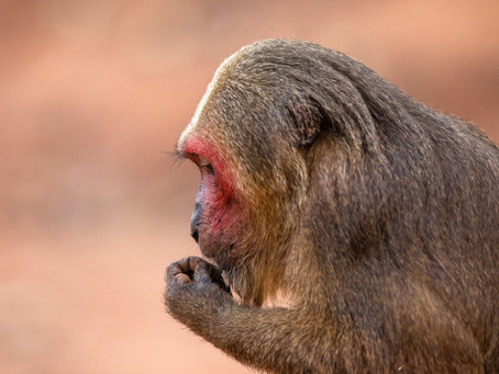 Djurbilder från Thailand