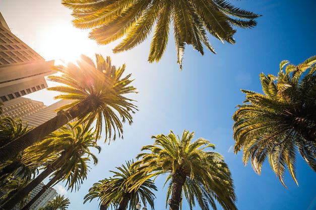 green-leaf-palm-trees-near-white-structu