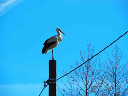 storch_P5060172