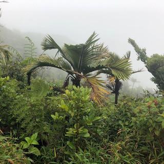 Wandern im Regenwald bei Regen ...
