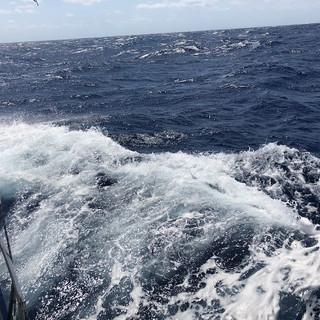 Auch grössere Wellen bringen sie nicht aus der Ruhe:
