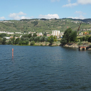 Weinberge am Douro