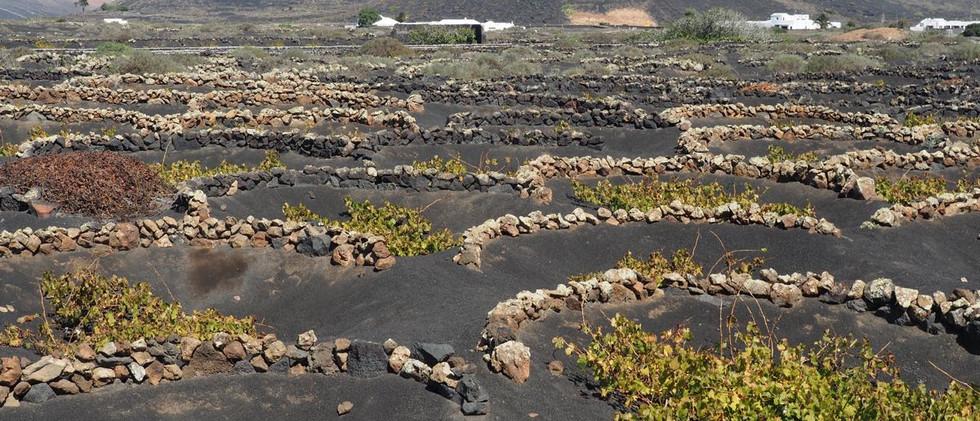 Weinbau auf Lanzarote. Das Resultat darf sich schmecken lassen.