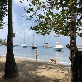 Blue Lagoon, Spaziergang mit freundlicher Begleitung