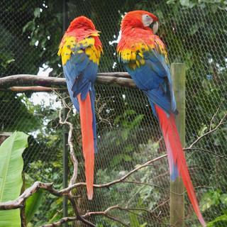 ... das hätte bei den Papageien nicht passieren können ...