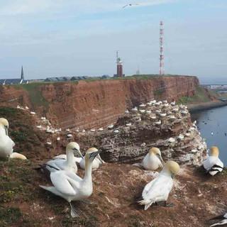 Ein Paradies für Tölpel und andere Vögel