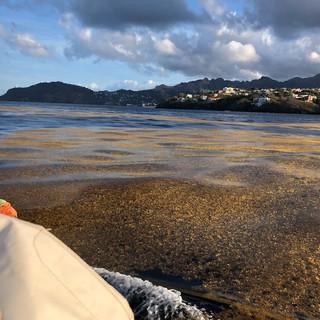Frühmorgens kommen wir in Kingstown an. Das Meer ist gelbgrün von Algen...