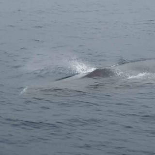 Ein Wal als Begleitschutz der WoC. Ein seltenes Bild.