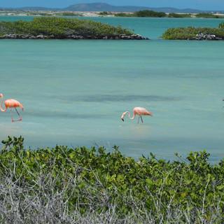 ...in denen sich Flamingos ihr Futter suchen.