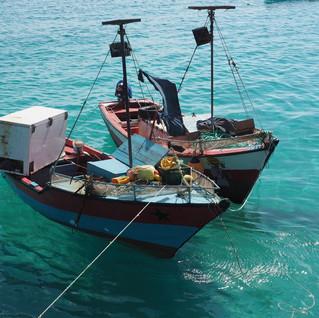 Fischerboote bringen kostbare Fracht ...
