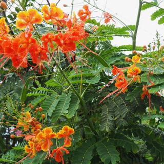 Inmitten der Häuser: Farbenprächtige Blüten - im Februar!