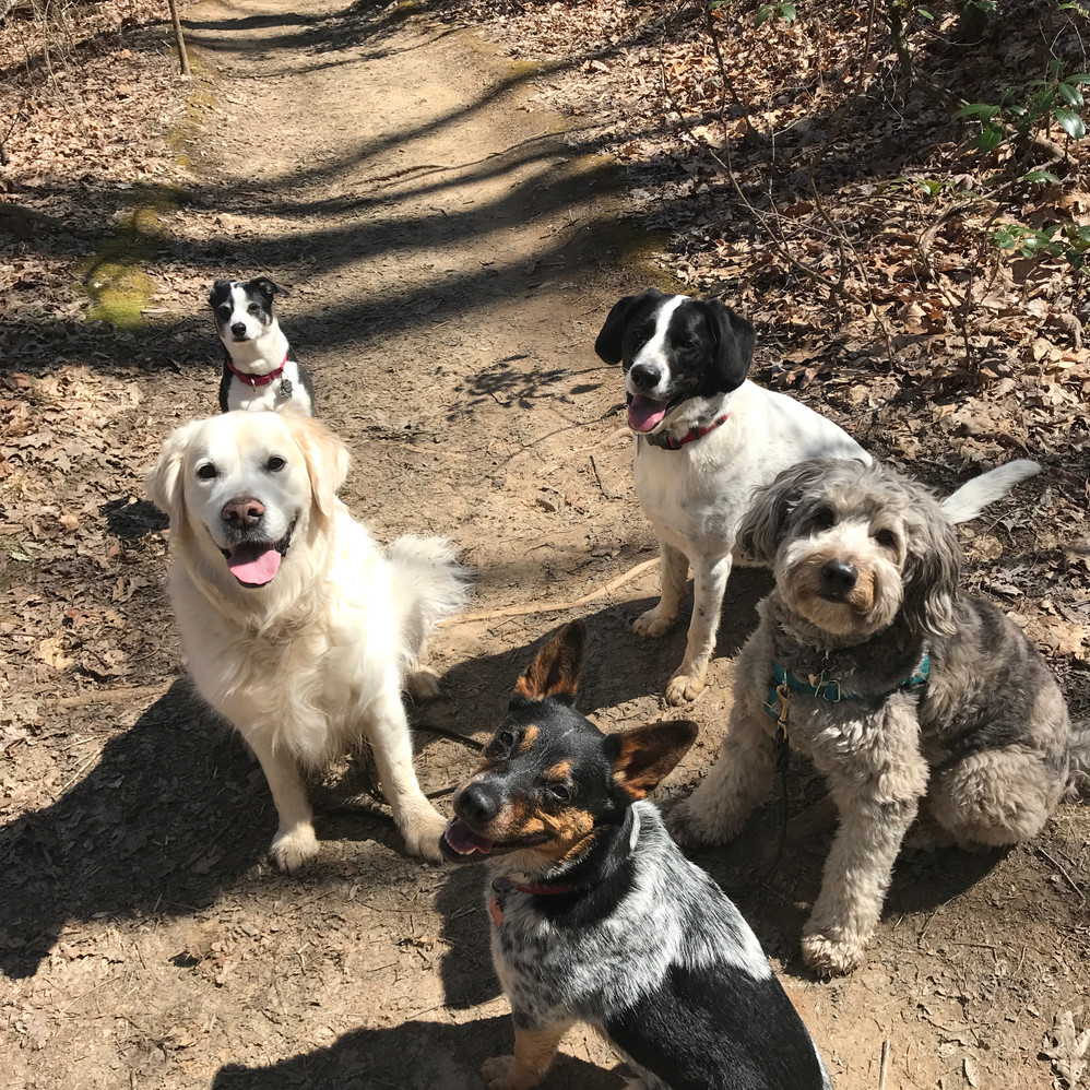 Wandering Wags Excursions
