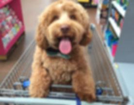 Shopping Doggie