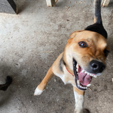 Dog and Human Aggression