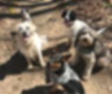 Horizontal dogs.jpg