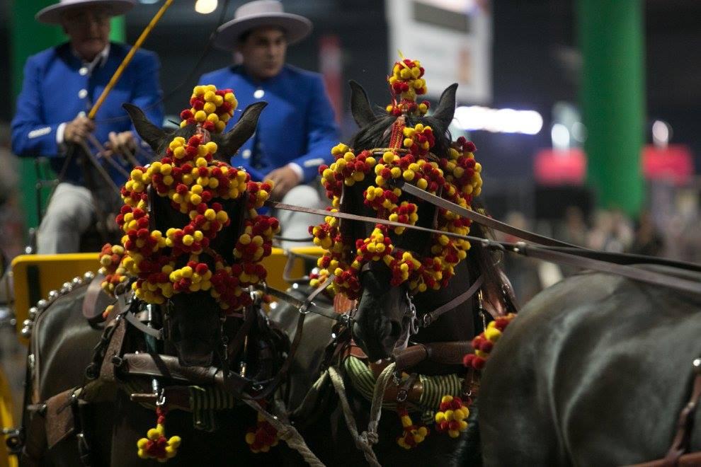 caballos y colores