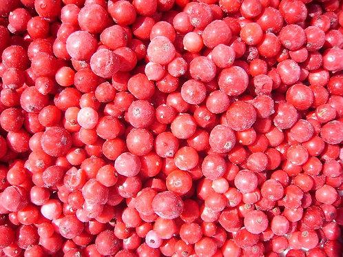 Rote Johannisbeeren gefroren Redcurrant frozen 1 Kg Pack