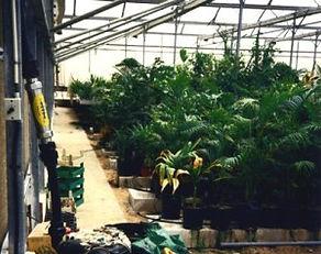Nursery with PTH Water Softener