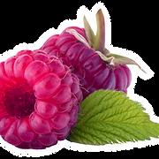 Fresh Raspberry Picture