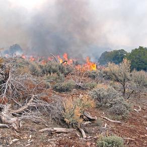 O perigo das queimadas para o transporte rodoviário de cargas do Centro-Oeste