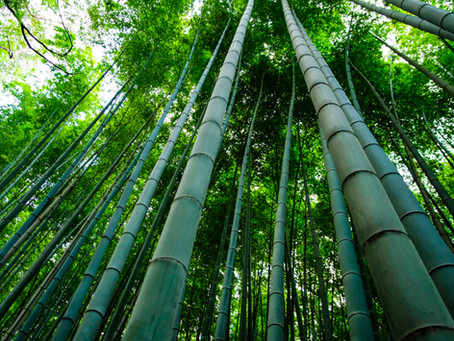 Bamboo – The Eco Friendly Alternative To Plastic?