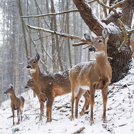 Oh Deer! How to Deer-Proof Your Yard This Winter