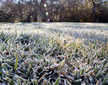 5 Ways You Can Prepare Your Lawn for Snow