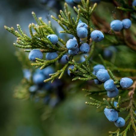 7 Native Plants for Your Landscape