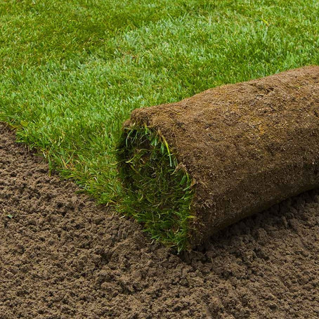 Sod vs. Seed: Which One Is for You?