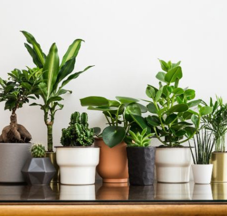 Top 10 Best Plants to Grow Indoors This Winter