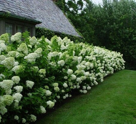 Planning Your Landscape: What to Consider