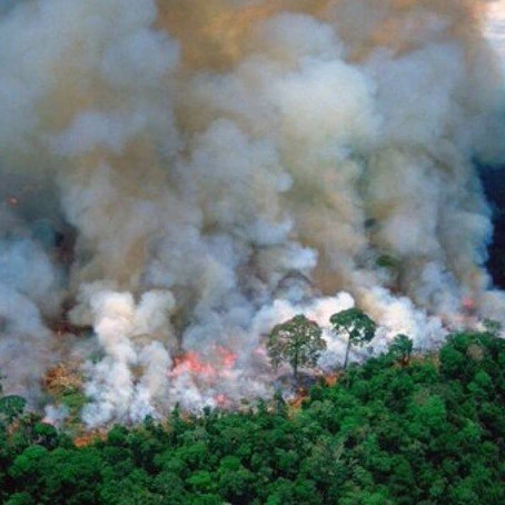 Why the Amazon Is Burning, and Why We Should Be Concerned