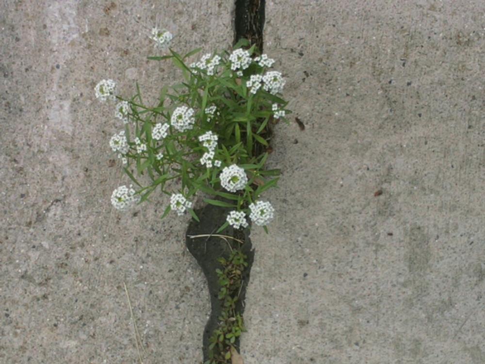 Flowers in crack